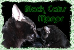 black cat manor.jpg (7349 bytes)